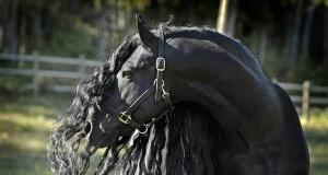Asaletleriyle herkesi kendine hayran bırakan dünyanın en güzel atları