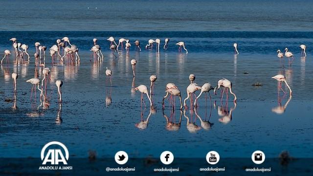 Konya'nın Kulu ilçesine 5 kilometre mesafedeki Düden Gölü'nde bu yıl yağışların etkili olması sonucu flamingo kolonilerinin sayısı arttı. Havaların ısınmasının ardından, önemli göç yolları üzerinde bulunan Düden Gölü, binlerce flamingonun hayat bulduğu bir alan oldu. Tuz Gölü'ne yakın bir noktada bulunan ve önemli bir habitat olan Düden Gölü'ne flamingoların gelmesi, bölgenin doğa harikası görüntüsüne ayrı bir güzellik kattı.