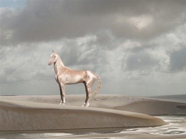The Akhal-Teke.Dünyanın en güzel atı olarak görülen Ahal Teke bir Türkmen atıdır. Orta Asya'da Türk halkları arasında özellikle Türkmenistan'da yaygındır. Ahal tekenin adı Manas ve Dede Korkut gibi Türk destanlarında geçer ve Türkmenistan'ın Ahal vilayetinde yaşayan Teke Türkmenlerinden gelmektedir.