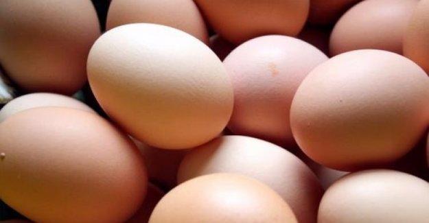 Avrupa'da zehirli yumurta korkusu
