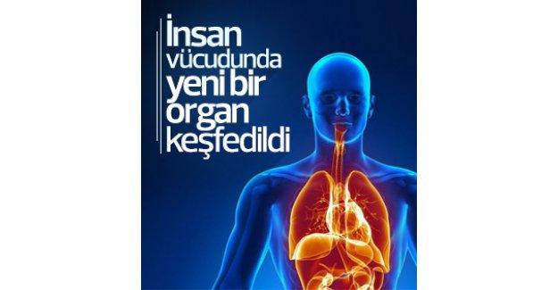 İnsan vücudunda yeni organ keşfedildi