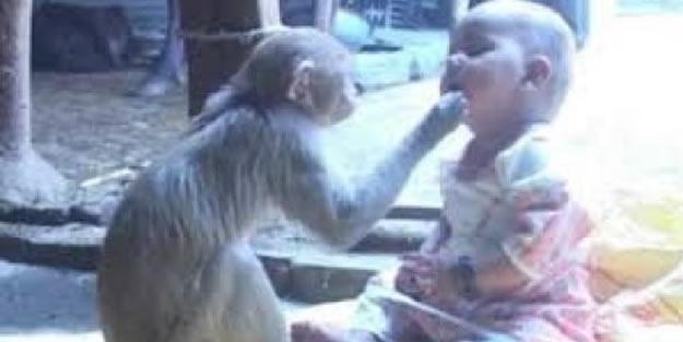 Maymun bebek bakıcısı oldu