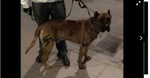 Stockholm'de Köpeğine Nazi Sembolü...