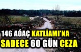 İsveç'te ağaç katliamına 60 gün ceza