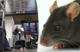İsveç'te bir uçakta fare bulundu uçuş saatlerce ertelendi