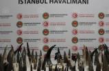 İstanbul Havalimanı'nda 77 kaçak bufalo boynuzu ele geçirildi
