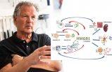 Proteine karşı antikorlar, covid-19 hastalarını kurtarabilir