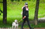 Danimarka'da iki vizon çiftliğinde ve bir köpekte koronavirüs tespit edildi