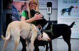 Finlandiya'da havaalanında eğitimli köpekler Covid-19 taraması yapıyor