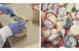 İsveç'teki küflü peynir skandalına soruşturma