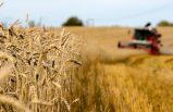 İsveç'in gıda ihracatı üç milyar arttı