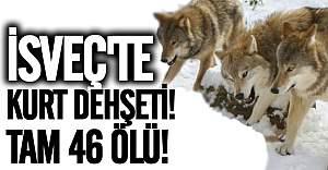 İsveç'te kurtlar dehşet saçtı