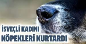 İsveçli kadın hayatını köpeklerine borçlu