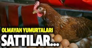 Yok artık: Tavuktan çıkmamış yumurtaları sattılar