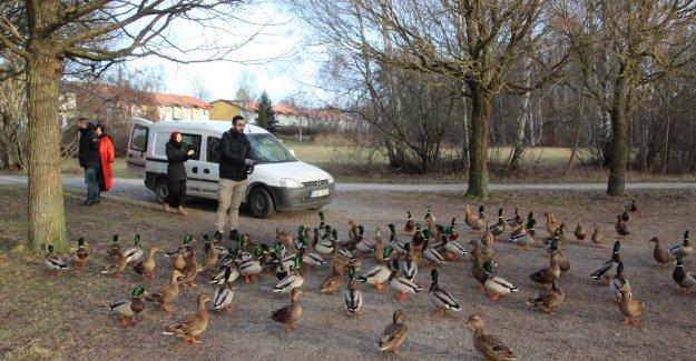 Stockholm'de yabani hayvanlar ve kuşlar için doğaya yem bıraktı