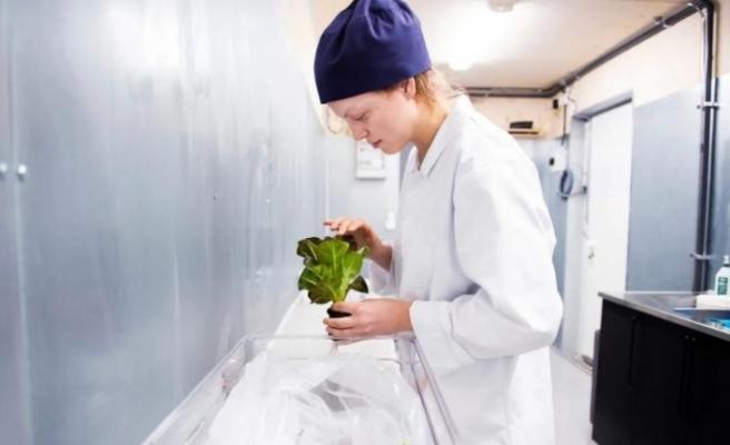Ikea mağazalarındaki konteynerlerde lahana yetiştiriyor