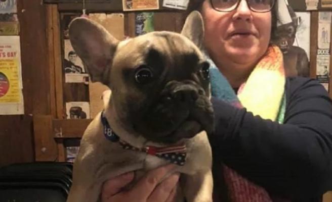 ABD'de bir kasabada Wilbur isimli köpek belediye başkanı seçildi