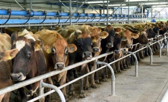 İklim krizi et tüketimini azaltmaya zorluyor