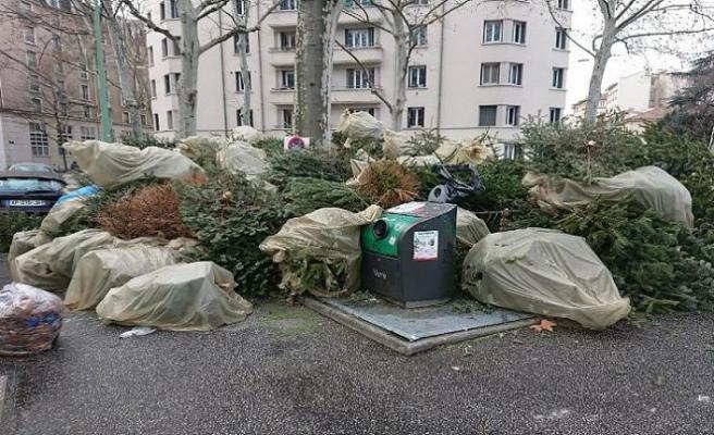 Noel'de evleri süsleyen milyonlarca çam ağacına ne oldu?
