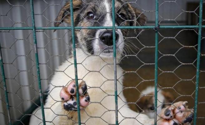 Sahibi ölen köpeğe 5 milyon dolar miras kaldı
