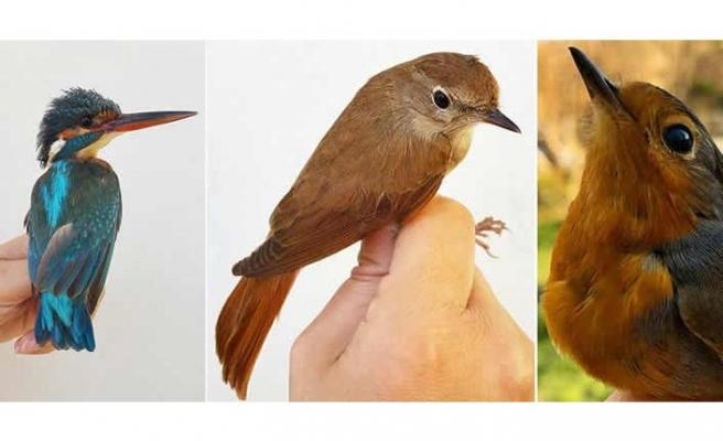 """İsveçli bilim insanlarından kuşların """"merkezi ısıtma sistemi"""" araştırması"""