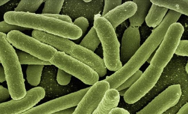 Olimlar minglab yillar mobaynida muz ichida 28 ta yangi virusni kashf etdilar.