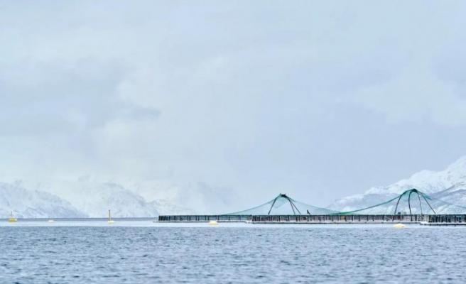 Norveç'teki klor sızıntısı yaklaşık 100 bin somonu öldürdü