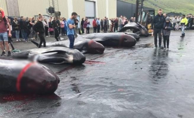 Danimarka'daki katliamda 53 yunus daha vahşice öldürüldü!