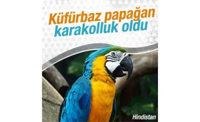 Hindistan'da papağan gözaltına alındı