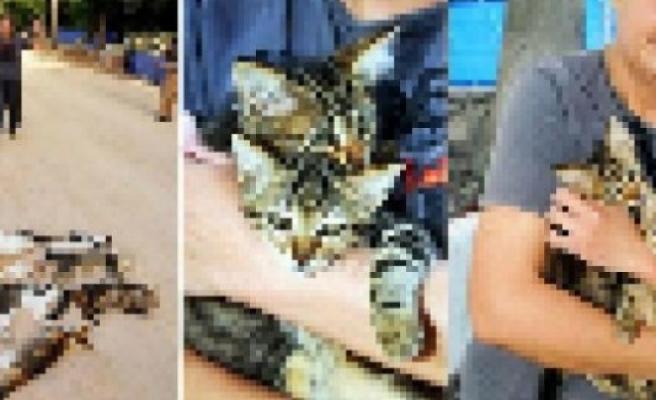 İsveç'te, 24 kediyi işkence ile öldürdü