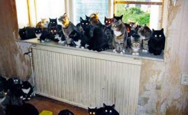 İsveç'te 32 kedi besleyen kadının evden atıldı