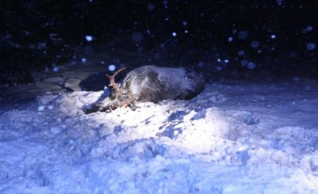 İsveç'te bir haftada 100 yakın yaban hayvanı kazası