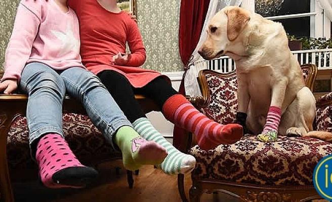 İsveç'te bugün yüz binlerce insan renkli çorap giyecek