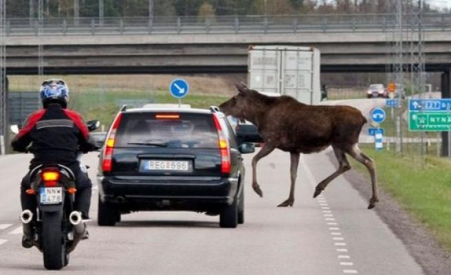 İsveç'te geyik kazalarını önleyecek buluşa ödül