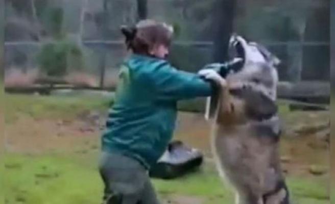 İsveç'te hayvan bakıcısı Kurt'la kavga etti!