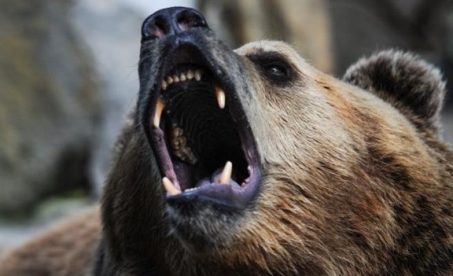 İsveç'te korku saçan ayılar öldürüldü