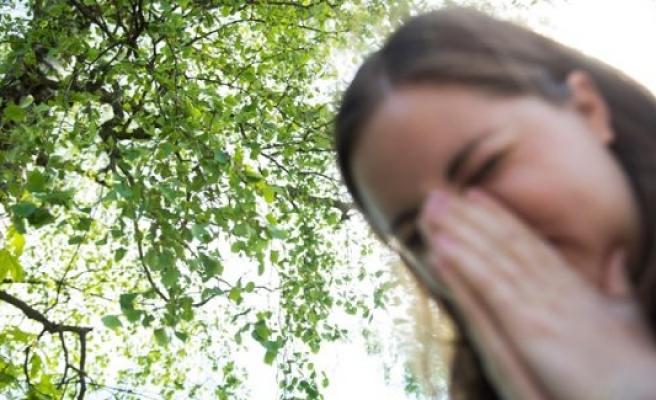 İsveç'te polen alerjisi olanlar için bu sene daha zor geçecek