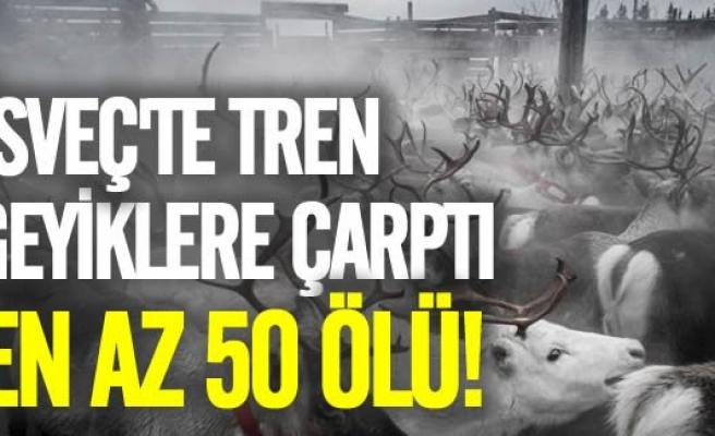 İsveç'te tren geyiklere çarptı en az 50 ölü