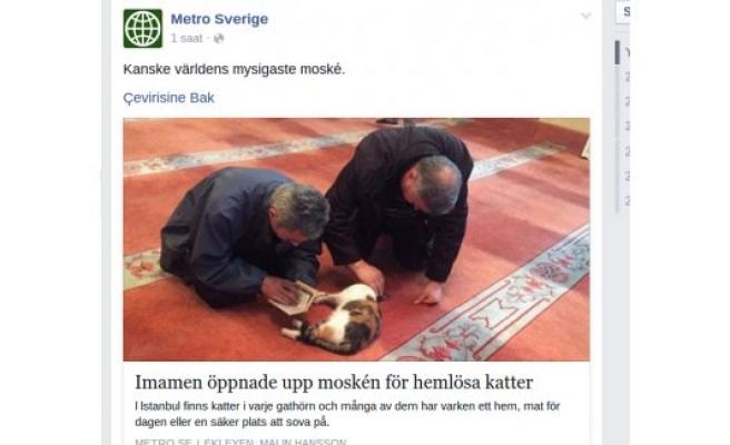 Kedi dostu imam, İsveç basınında