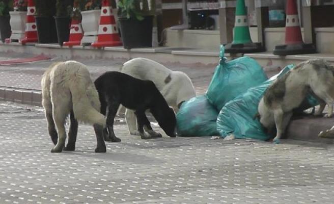 """Kulu'da Sokak Köpekleri İçin """"Yaşa-Yaşat"""" Projesi"""