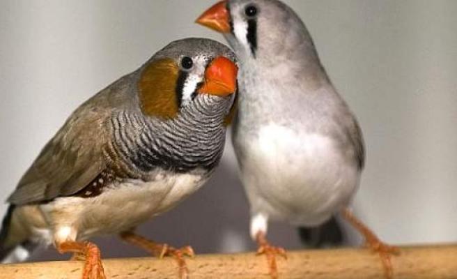 Türkiye'de En Sevilen Ev Hayvanı: Kuş, İsveç'te İse?