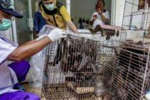 DSÖ: Salgın riskine rağmen canlı hayvan pazarlarının kapatılmasını tavsiye etmiyoruz