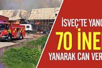 İsveç'te 70 inek yanarak öldü!