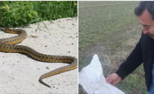 Kulu'da kazıda bulunan  yılan doğaya bırakıldı