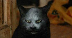 Şeytan mı kedi mi tartışması sosyal medyayı salladı