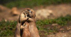 Hayvanlar aleminde aşkın varlığını kanıtlayan 49 görsel