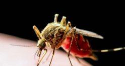 Sinekler koronavirüs taşır mı?