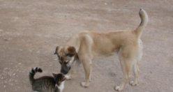 Kıskandıran kedi köpek dostluğu