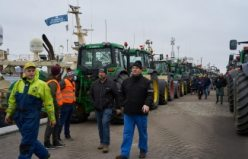 Danimarka'da vizonların itlaf edilmesine traktörlü protesto