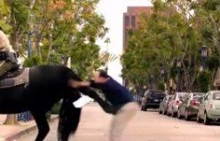 Atın intikamı! At öyle bir tekme attıki adam uçtu